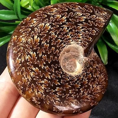 153g PRETTY NATURAL Jade Pattern Ammonite Fossil FROM Madagascar -A001