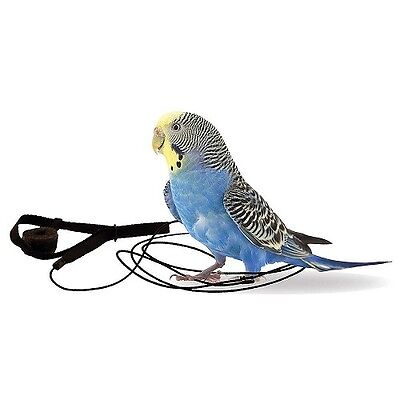 New Size:   The Aviator Parrot Harness & Leash - Mini - Blue