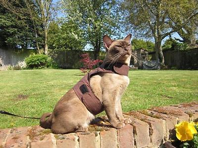 Mynwood Cat Walking Jacket Harness Vest Holster  CHOCOLATE Adult cat or Kitten