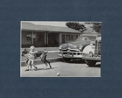 GREAT DANE Drags Little Girl Out of Danger 1958 Print Matted