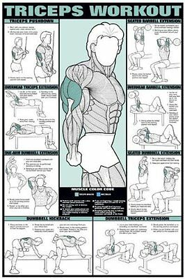 """Triceps Workout 24"""" X 36"""" Laminated Chart"""