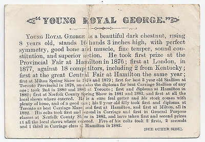 Famous horse Young Royal George ad card - Zimmerman & Brampton, Ontario - 1880s