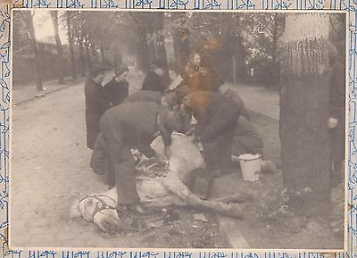 """Original Photo  Militare WW2 """"   Death for the horse - the lives of people """""""