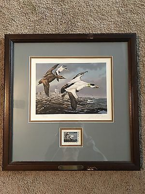 Framed 1985 Maine Migratory Waterfowl Stamp And Print, David Maas