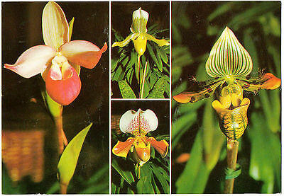 """Multiview-""""4 Pictures of Orchids on the Island of Madeira""""(F.Ribeiro MD 610)"""
