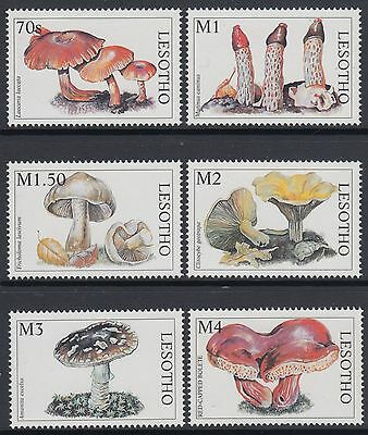 XG-AN891 LESOTHO - Mushrooms, 1998 Nature, 6 Values MNH Set