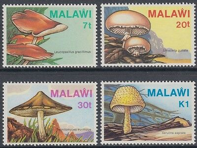 XG-AN926 MALAWI - Mushrooms, 1985 Nature, 4 Values MNH Set