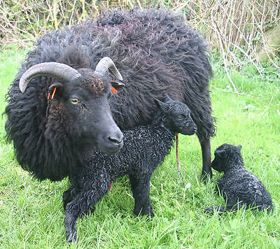 HEBRIDEAN SHEEP FLEECES for SPINNING, FELTING & CRAFTS