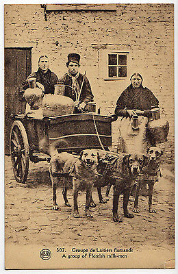 Delivering The Milk With A Dog Cart (Flemish) ~ An Old Photo Postcard (Y19)