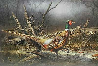 Ring Necked Pheasant by Dennis Schmidt Bird Hunting Ltd Ed Art Print