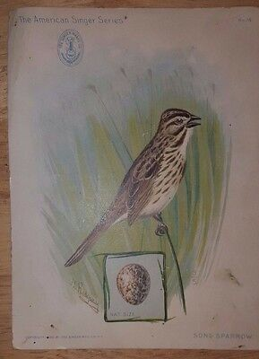 Song Sparrow SINGER SEWING MACHINE Trade Card 1899 - American Series No 14 EGG