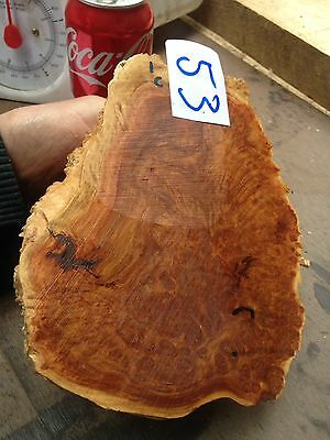 Coolibah Burl Woodturning Blanks/burrs/exotic Woods