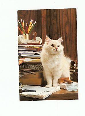 Vintage uncirculated Postcard Cat North Shore Animal