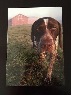 German Shorthaired Pointer Walter Barnyard Notecards (Pack of 4) GSP