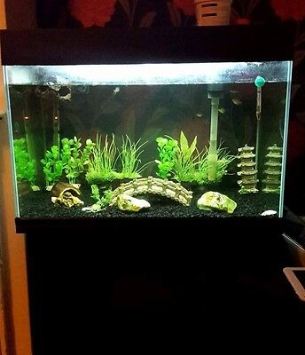 Large fish tank with heater filter light ornaments and for Fish tank with filter and heater