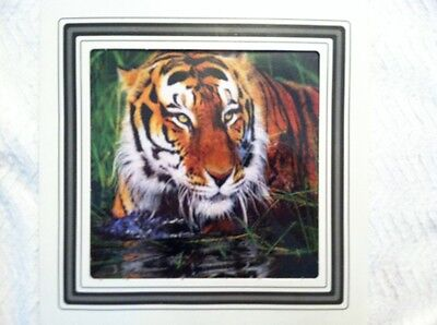 Animal Photo 8X8 Tiger With Frame