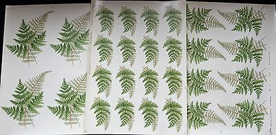 Ceramic Decals By Matthey  3 Diferant Sheets 28 Decals Of Ferns Right Price