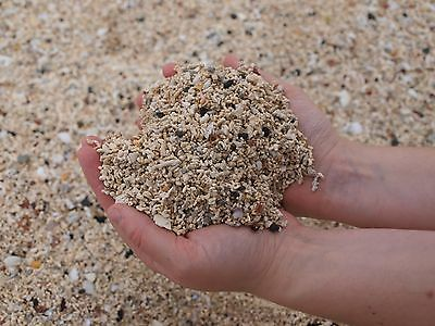 100g Isle of Skye Coral from Claigan Coral Beach - Sea Shell Fossils