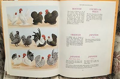POULTRY COLOUR GUIDE Book Dr. Batty ~ Chicken ~ Ducks ~ Geese ~ Turkey ~ UK