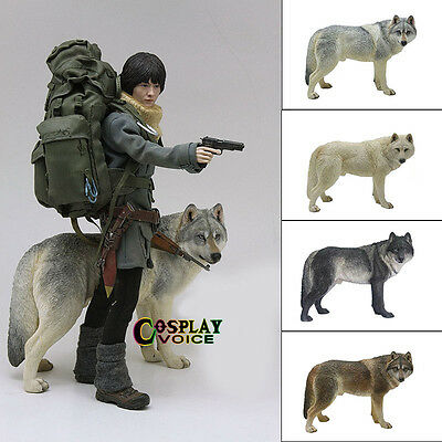 MR.Z 1/6 Simulation Animal Coyote Siberian Wolf Car Decorations BJD Accessories