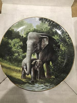 The Asian Elephant Plate By Will Nelson