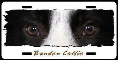 "Border Collie   "" The Eyes Have It "" License Plate"