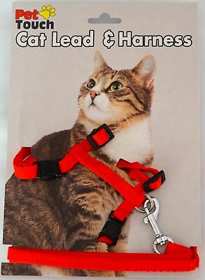 Red Cat lead and Harness Walk/Exercise!