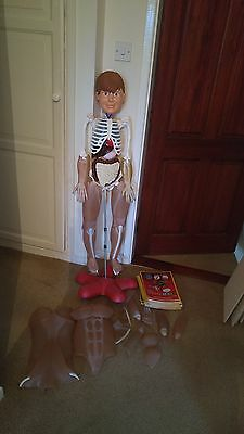 How Your Body Works Billy Bones Plastic Skeleton Model Organs with muscles+ skin