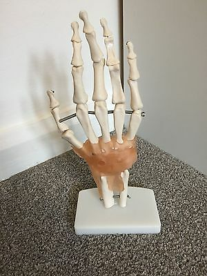 Human hand and wrist joint model with ligaments, physio/medical students