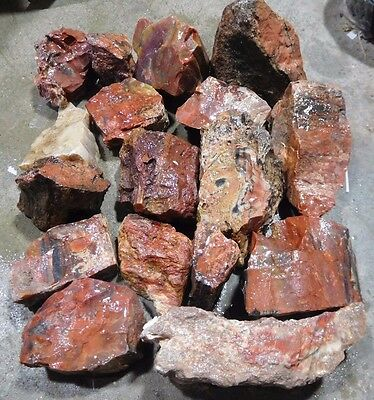 Arizona Rainbow Petrified Wood-10+ Lbs--17 PC