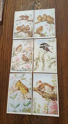 MARY FORSTER KNIGHT Early Bird Artist Postcards set of 6