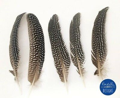 5 Beautiful Spotted guinea Fowl Feathers Crafts, Diy Dreamcatchers, Millinery