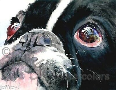 French Bulldog Pied Dog Art Print Watercolor Painting Judith Stein EYE SEE YOU