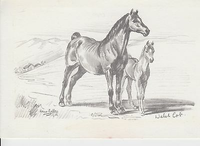 Postcard of Artist drawn Horse and Foal (180817)