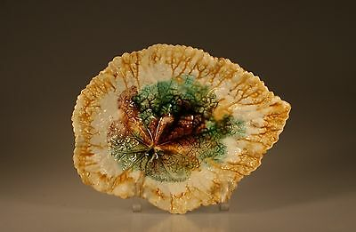 Majolica Aesthetic Movement Leaf Shape Plate, Unknown Maker c. 1880s