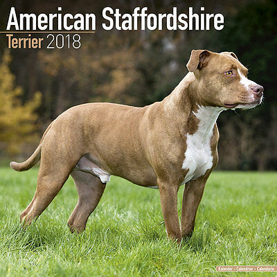 Calendrier 2018 - STAFFORDSHIRE TERRIER AMERICAIN