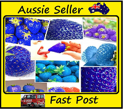 Purple Strawberries 300 Seeds Lots Nutritious Delicious Fruit Home Garden