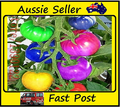 Very Rare Imported Rainbow Tomato Seeds vegetable seeds Potted Plant 100 Seed