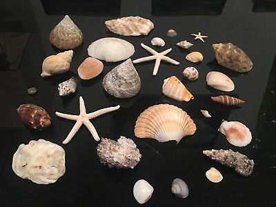 Large collection of various sea shells all shapes and sizes wedding deco 4.5kg