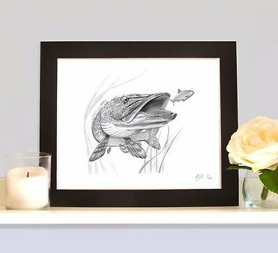 PIKE Art Drawing Fishing Print Picture MOUNTED As seen in the book Willow Pitch3