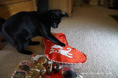 Cat Stocking with mix of cat toys and treats