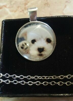 Brand New Silver Adorable Maltese Puppy Dog Necklace Dg48