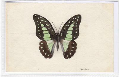 Watercolour painting of a butterfly  (C29621)