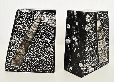 Heavy black marble orthoceras fossil  book ends bookends fab ornament or gift