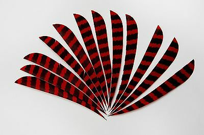 12 Barred Turkey Feather Fletching 3in Parabolic