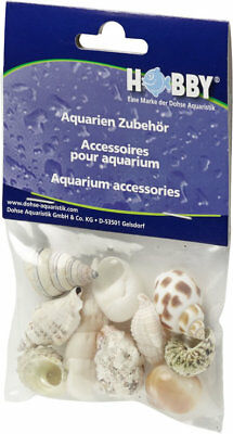 Hobby Sea Shells Reef Snail Decoration & Housing for Hermit Crabs Medium 10 pcs.