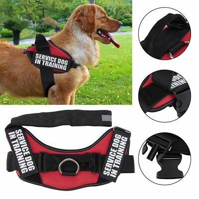 Working Dog Vest Service TRAINING Dog Harness Heavy Duty For Pitbull Boxer MA