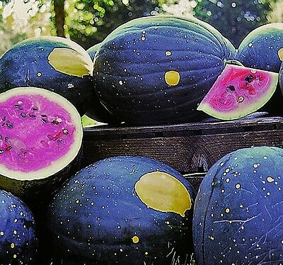 """V0273B Watermelon """"Moon and Stars"""" x30 Bulk seeds, **5c goes to Cancer Council"""