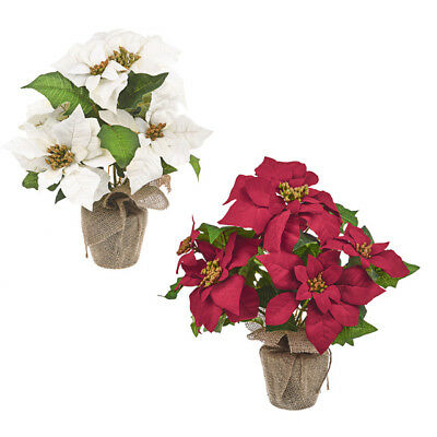 Artificial 38cm Poinsettia Plant in Hessian Wrapped Pot - Red or Ivory Flowers