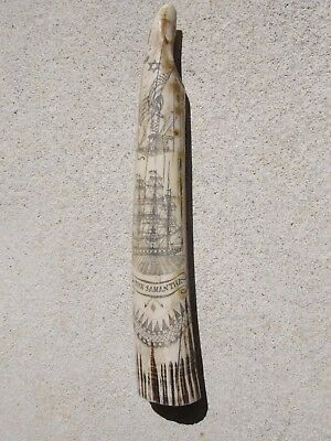 Scrimshaw Resin Replica Walrus Tusk the SAMANTHA  #11